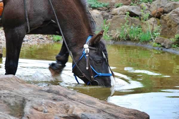 hilfen um ein pferd halfterführig zu machen